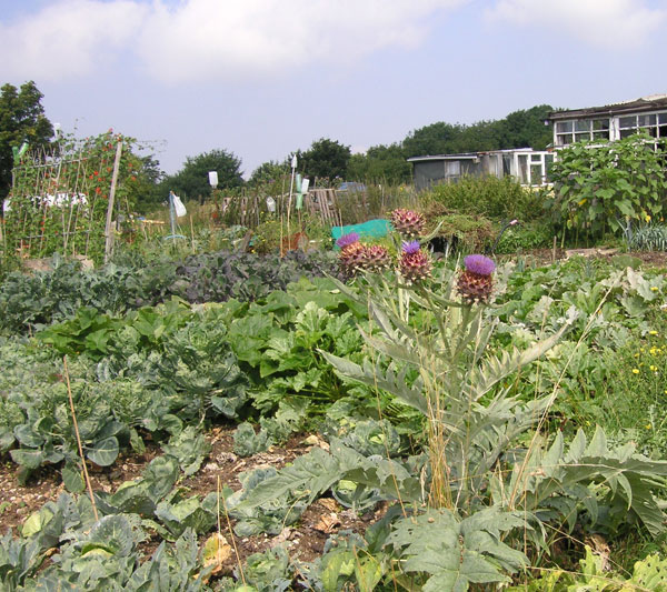 allotment-2005